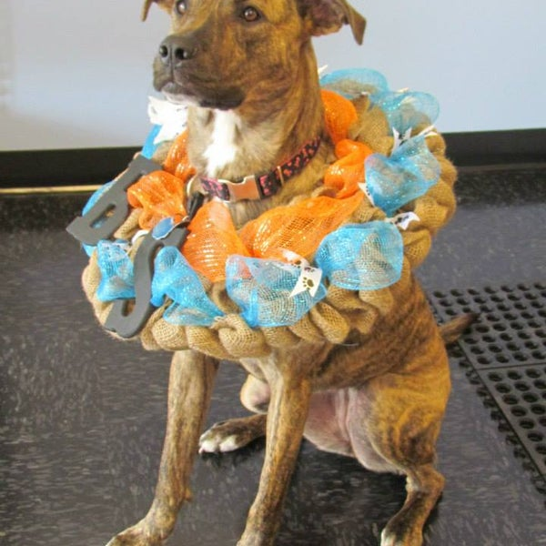 Bark sparkle self service dog wash grooming salon 12048 bark sparkle self service dog wash grooming salon 12048 southshore pointe rd solutioingenieria Gallery