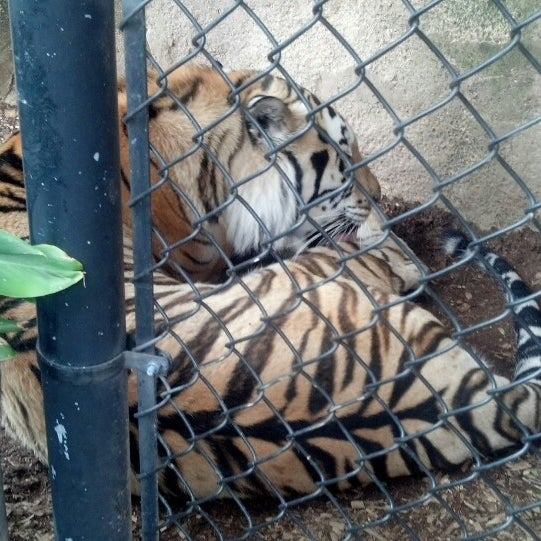 Photo taken at LSU - Mike's Habitat by Keith C. on 6/8/2013