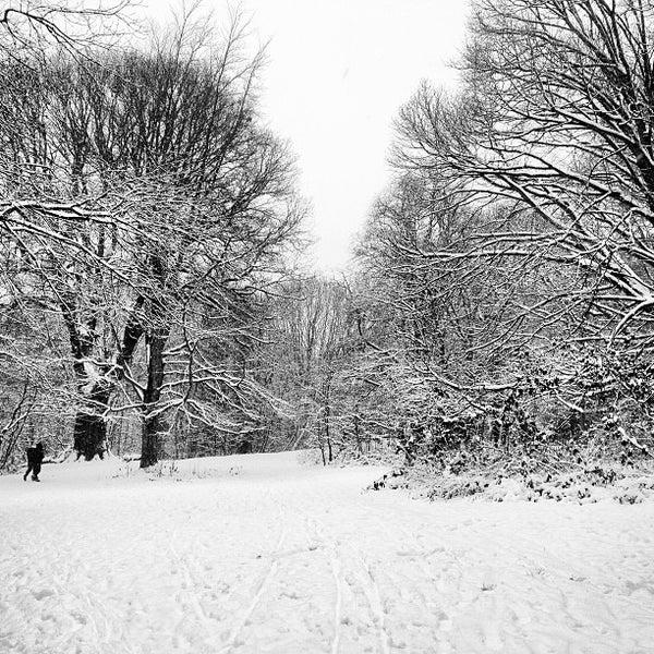 1/20/2013 tarihinde Louiseziyaretçi tarafından Hampstead Heath'de çekilen fotoğraf