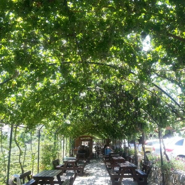 7/25/2013 tarihinde hakan y.ziyaretçi tarafından Şirince Artemis Şarap ve Yöresel Tadlar Evi'de çekilen fotoğraf