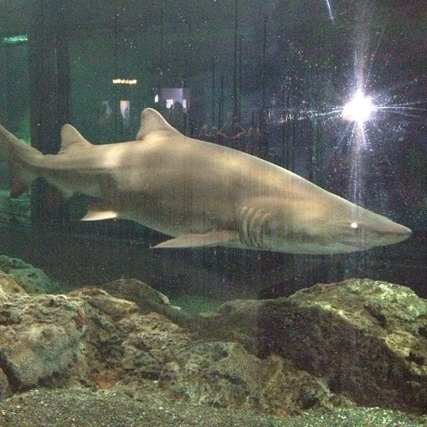 Photo taken at National Aquarium by Rich on 7/28/2012
