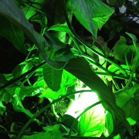 Foto tomada en Natura por Joe D. el 1/12/2012