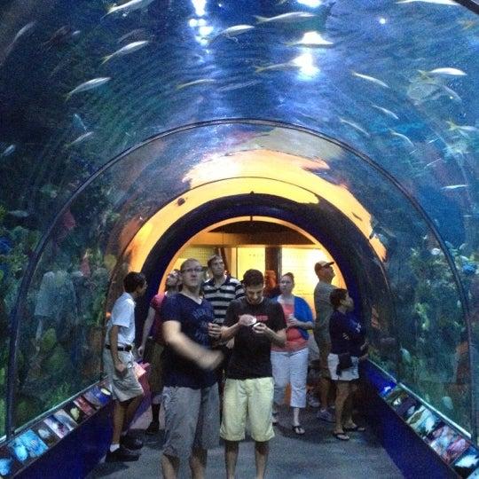 Audubon Aquarium of the Americas - French Quarter - 111 tips