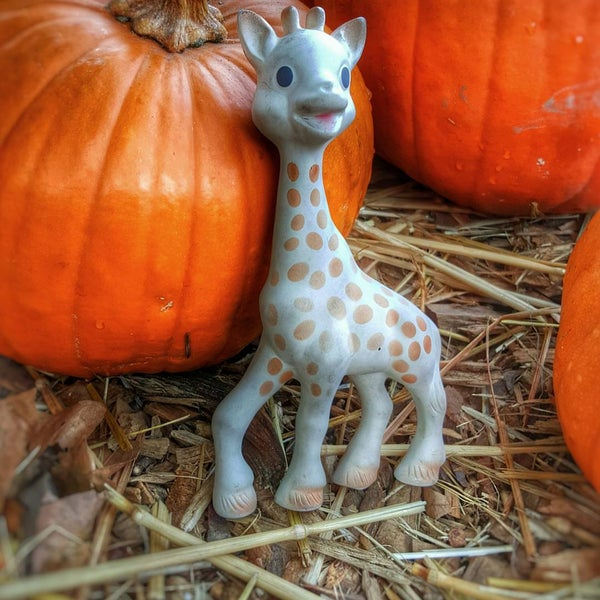 Photo taken at Clancy's Pumpkin Patch by Gregarious N. on 10/24/2015