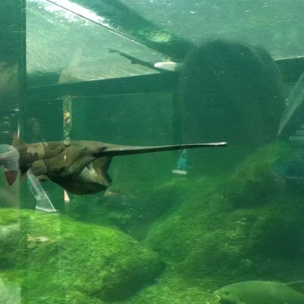 aquarium du perigord noir le bugue aquitaine