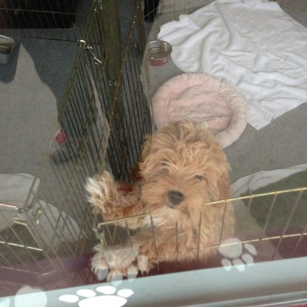 Km dog grooming downtown chula vista chula vista ca solutioingenieria Choice Image