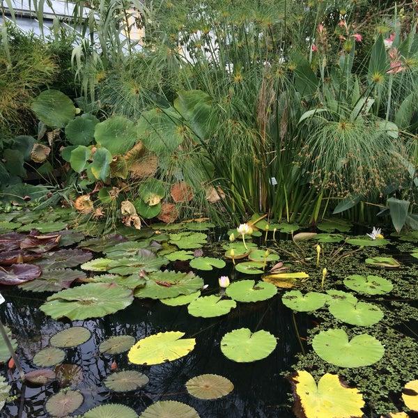 botanischer garten botanical garden in erlangen. Black Bedroom Furniture Sets. Home Design Ideas