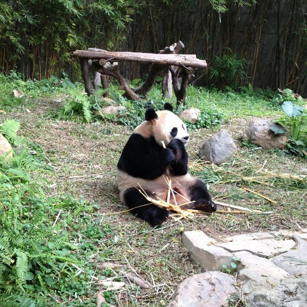 Photo taken at Xiang Jiang Safari Park, Guangzhou by Katty C. on 1/12/2013