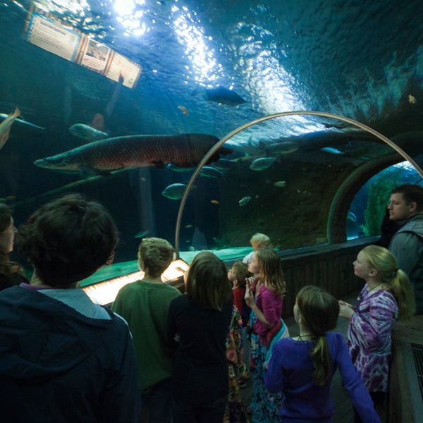 sea minnesota aquarium east bloomington 120 e broadway