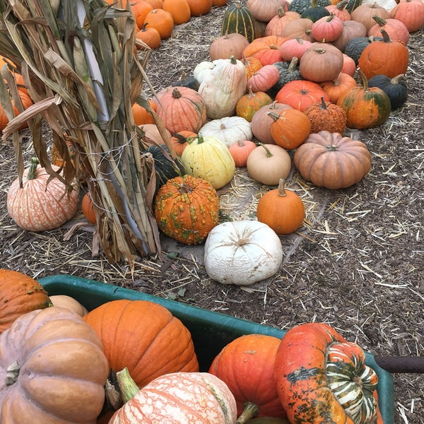 Photo taken at Clancy's Pumpkin Patch by Natalia G. on 10/11/2017