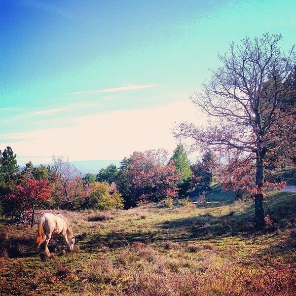 Photo taken at Luberon by Lindsay K. on 4/3/2013