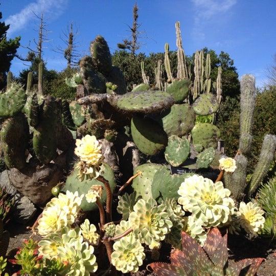 Mendocino coast botanical gardens garden in fort bragg - Mendocino coast botanical gardens ...
