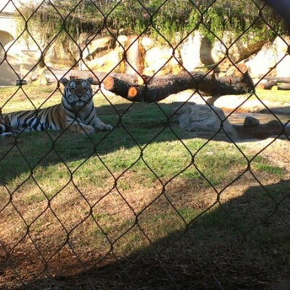 Photo taken at LSU - Mike's Habitat by Nicole S. on 11/8/2012
