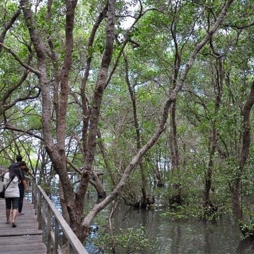 Hutan lindung ini juga menjadi rumah bagi 30 spesies binatang yang dilindungi, pun lokasi persinggahan burung pantai.