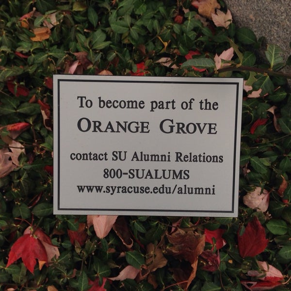 The Orange Grove Garden
