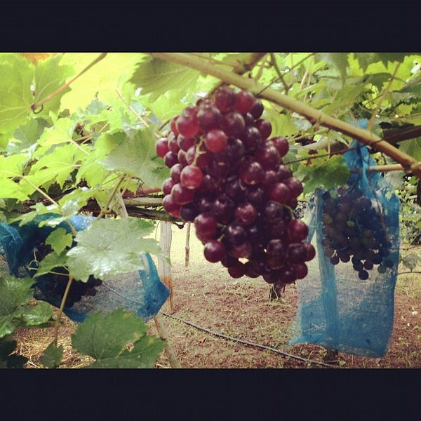 Photo taken at Lampang Vineyard by Jesada K. on 9/25/2012