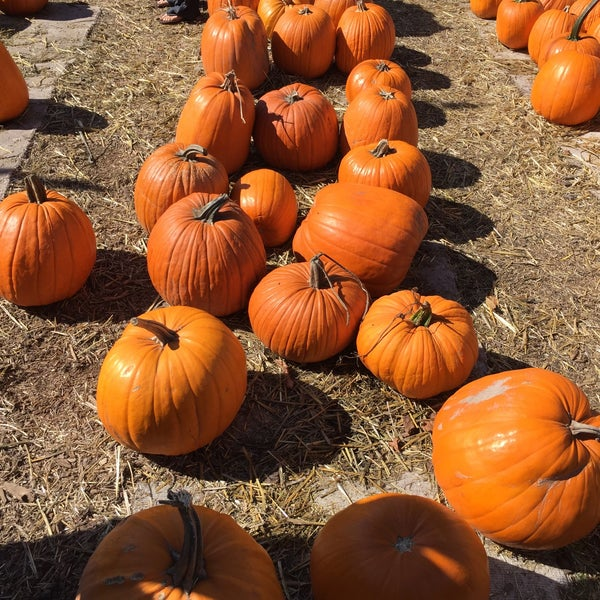 Photo taken at Clancy's Pumpkin Patch by Alice W. on 10/23/2016