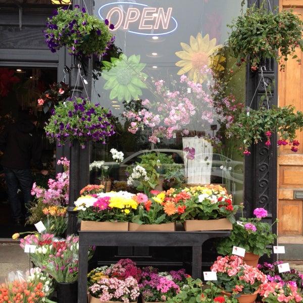 Steves flower market flower shop in chicago for Steve s garden market