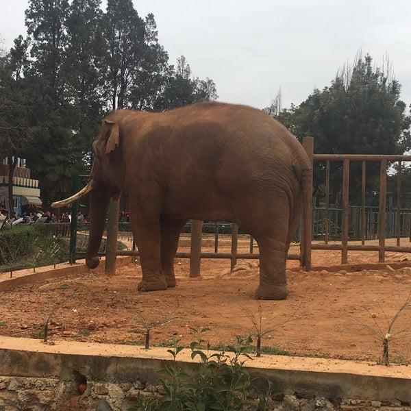 圆通山昆明动物园 (Kunming Zoo)