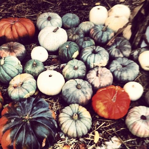 Photo taken at Clancy's Pumpkin Patch by Tarantula S. on 10/25/2012