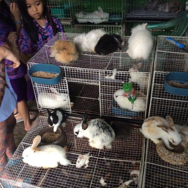 Pasar Hewan Barito Kebayoran Baru Jakarta Jakarta