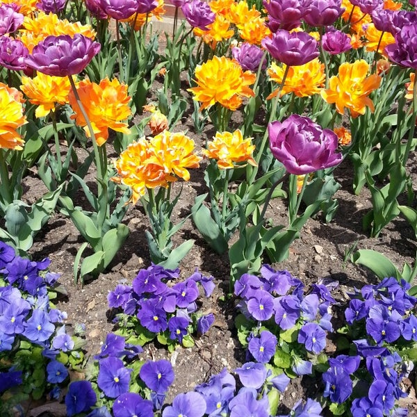 Photo taken at Cantigny Park by Wincyl D. on 5/10/2014