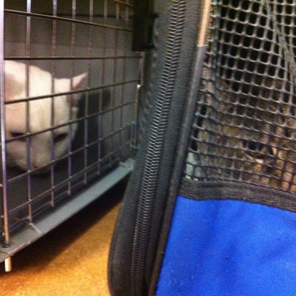 Photo taken at Larchmont Animal Clinic by Kristina H. on 7/12/2013