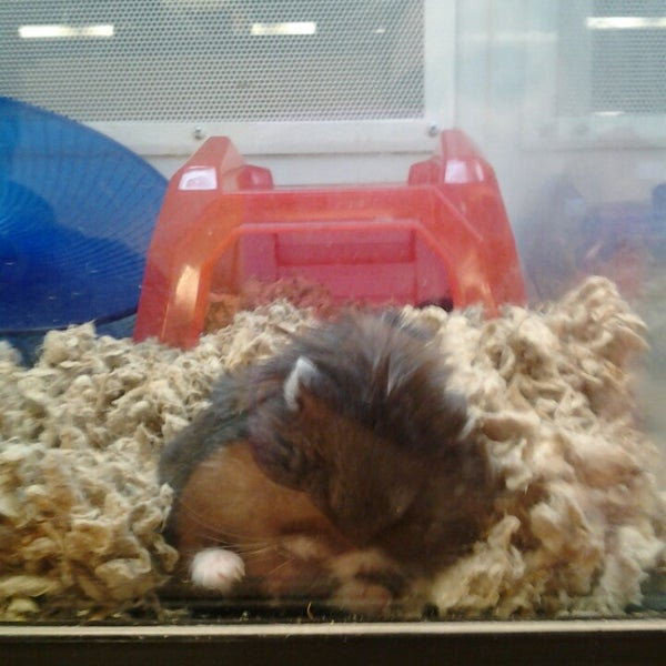 Photo taken at Petco by Caitlin C. on 3/26/2013