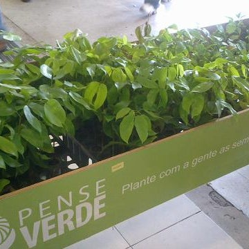 Fazendo sua compra aqui você leva pode levar uma muda de jatobá ou ipê amarelo p plantar...