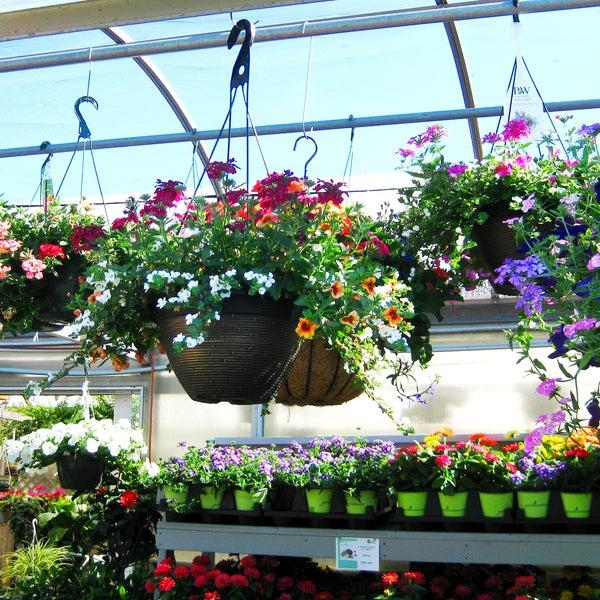 Photos at Primex Garden Center - Flower Shop in Glenside