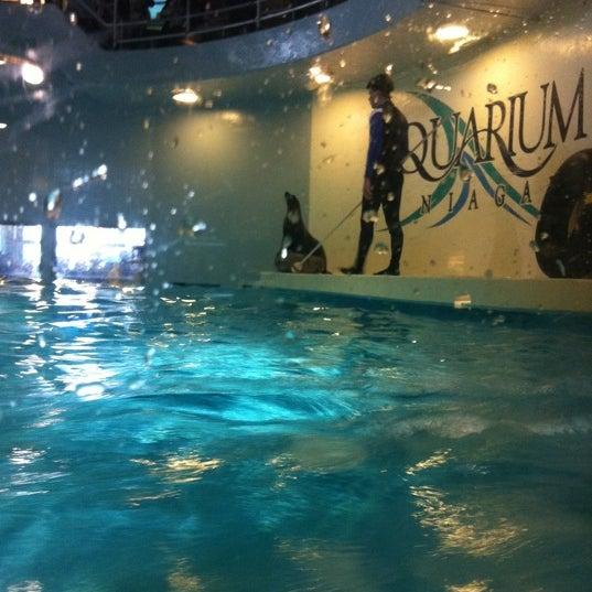 Aquarium Of Niagara Aquarium