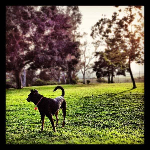 Grape Street Dog Park San Diego
