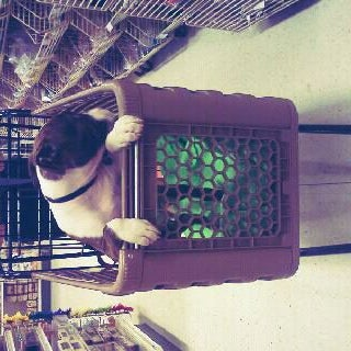 Photo taken at Michaels by Cat ♡. on 1/28/2012