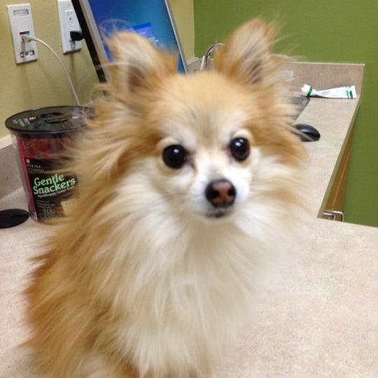 Photo taken at Aloha Animal Hospital by Stella M. on 2/29/2012