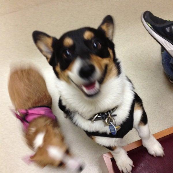 Photo taken at Aloha Animal Hospital by Rusty F. on 3/1/2013