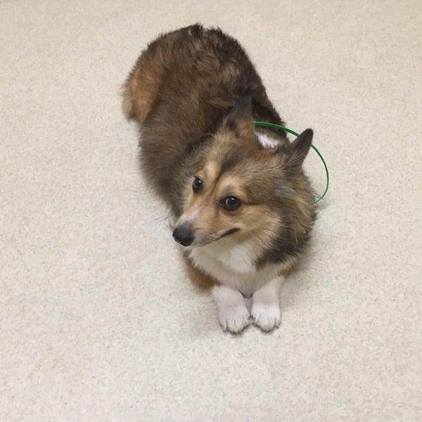 Photo taken at Aloha Animal Hospital by Rusty F. on 10/1/2015