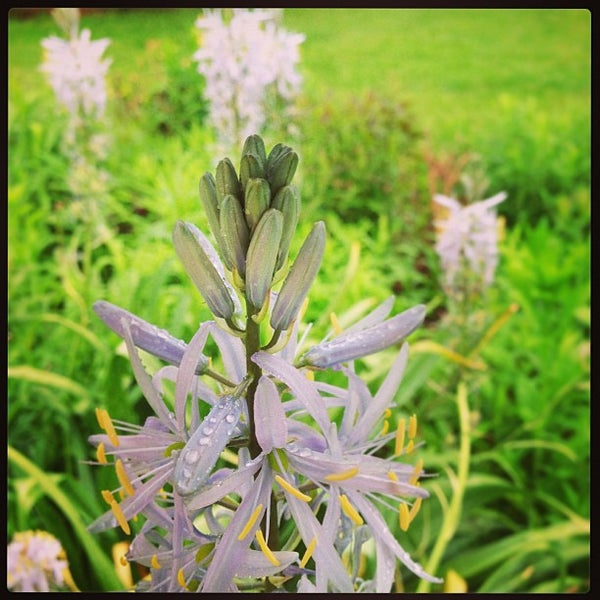 Photo taken at Planting Fields Arboretum by Michael Z. on 5/18/2013