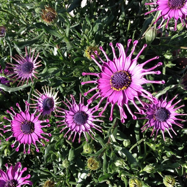 Foto tirada no(a) Dallas Arboretum and Botanical Garden por Faith H. em 3/15/2013