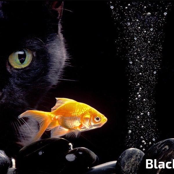 Foto scattata a Blackfish Adana da özkan ö. il 1/5/2016