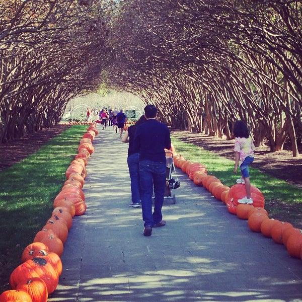 Foto tirada no(a) Dallas Arboretum and Botanical Garden por An N. em 11/4/2012