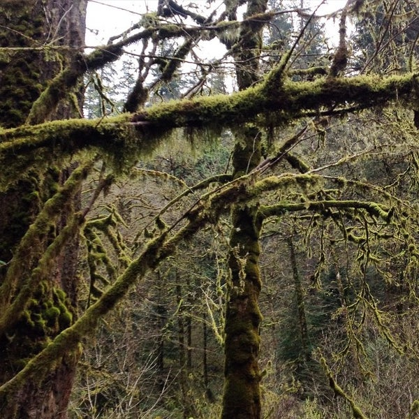 Photo taken at Wahclella Falls Trail by Guillaume G. on 3/21/2015