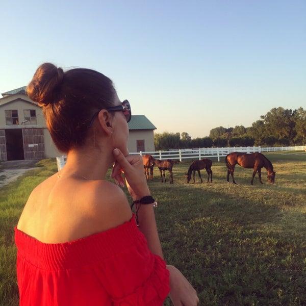 7/29/2018 tarihinde Nihalziyaretçi tarafından Olimpos At Çiftliği'de çekilen fotoğraf