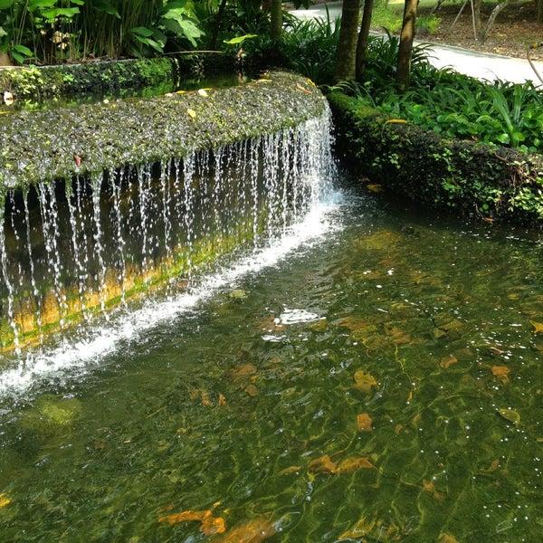 Entrance koi pond botanic gardens for Koi pool water gardens thornton