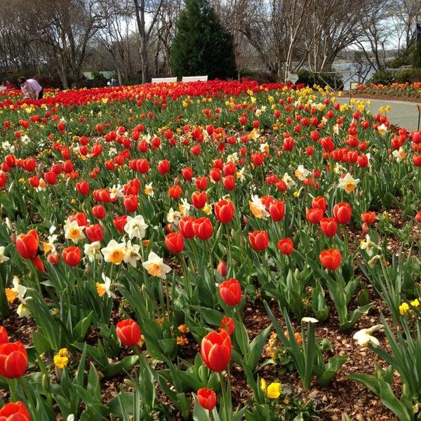Foto tirada no(a) Dallas Arboretum and Botanical Garden por Clyde A. em 3/3/2013