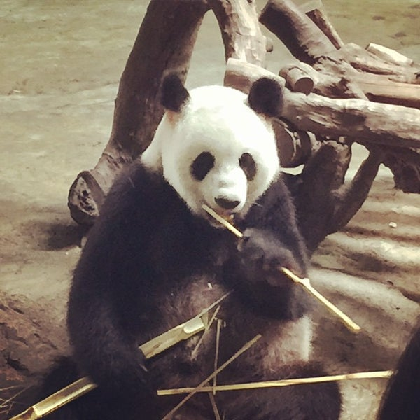 Photo taken at Xiang Jiang Safari Park, Guangzhou by Matt W. on 6/21/2015