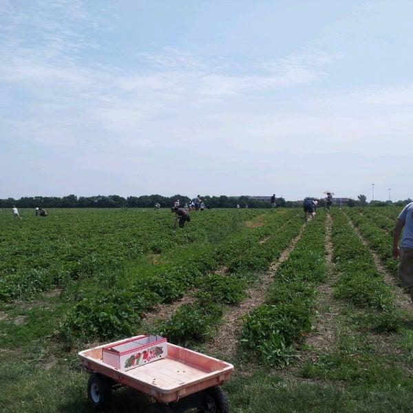 Pick. at Garden Patch Farms - Homer Glen, IL