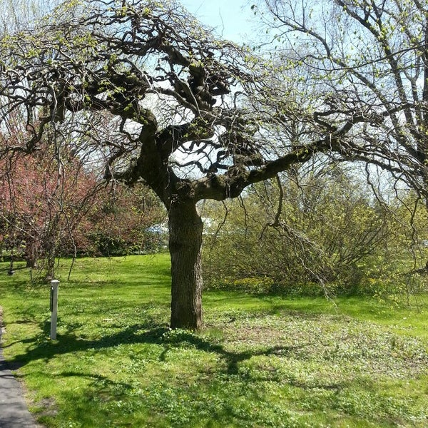 Photo taken at Planting Fields Arboretum by Cenzo on 4/27/2013