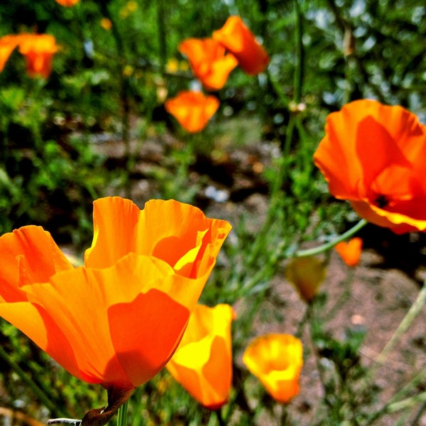 Photo Taken At UCLA Mildred E. Mathias Botanical Garden By Sangeeta On 4/24