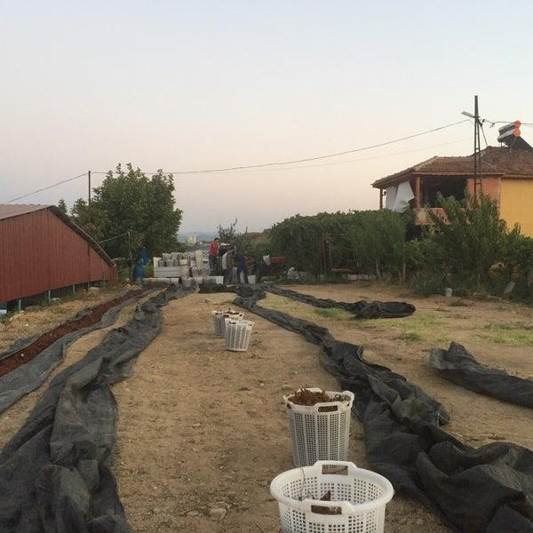 9/4/2015에 Ahmet Z.님이 zenginler ticaret süt ve besi çiftligi에서 찍은 사진