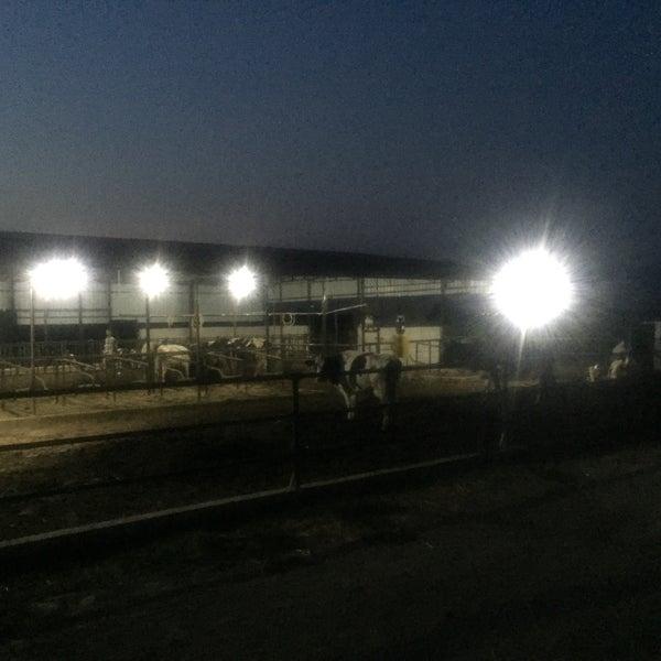 8/4/2015에 Ahmet Z.님이 zenginler ticaret süt ve besi çiftligi에서 찍은 사진